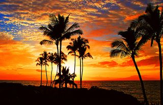 Tropical Roundup