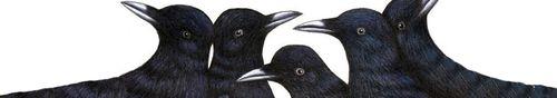 Ravenheader