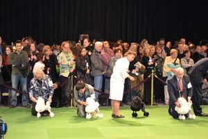 231970-westminster-dog-show-day-1