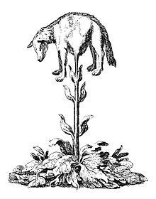 220px-Vegetable_lamb_(Lee,_1887)-1