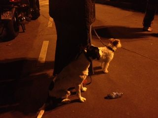 Dogs_watching_fireworks_2