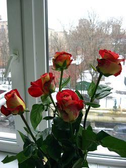 Roses_window_3_1600