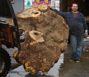 Buckeye_burl_whole_Mini_e