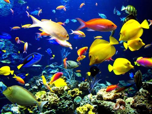 Aquarium-fish-01