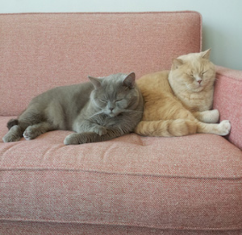 Mb kitties on couch