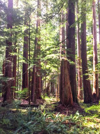 Skok_Forest03