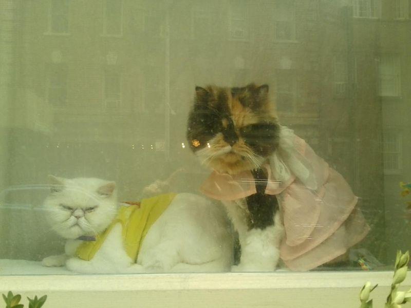 Catsw10th
