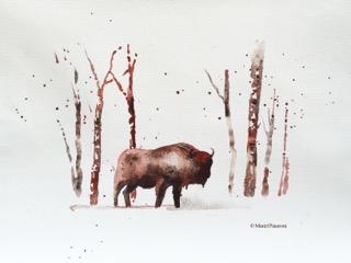 Bison C