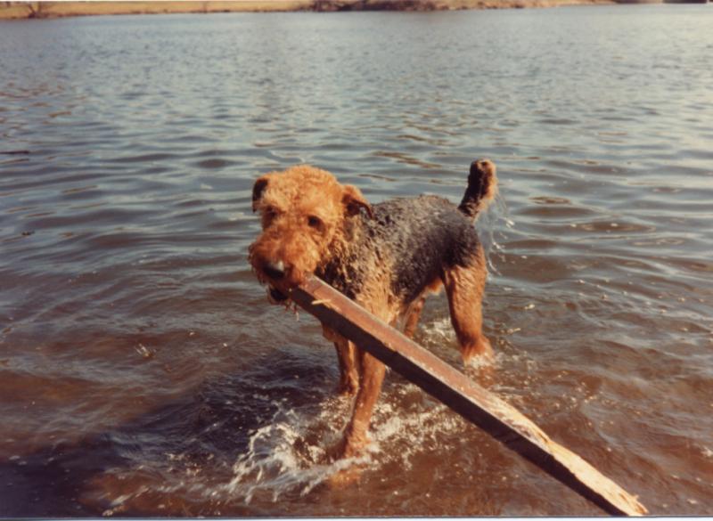 Molly w stick