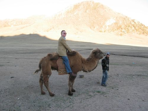 Dl on Camel